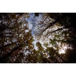 Canon Lente  EF 8-15mm f/4L Fisheye Zoom Angular